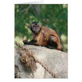 Mono del capuchón lindo pero irritable tarjeta