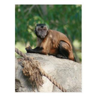 Mono del capuchón lindo pero irritable tarjetas postales