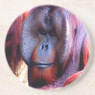 Mono del pensador profundo