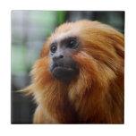Mono del Tamarin Azulejo