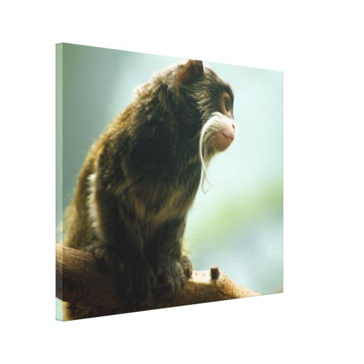 Mono del Tamarin Lona Estirada Galerias