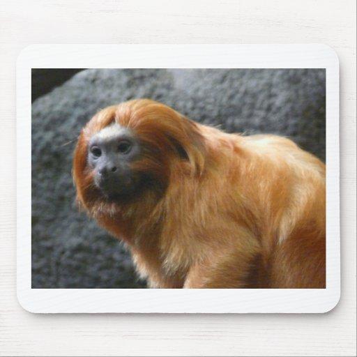 mono del tamarin tapete de ratones