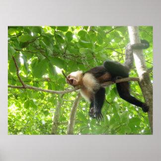 Mono divertido del capuchón en un árbol póster