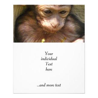 mono dulce del bebé folleto 11,4 x 14,2 cm