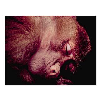 Mono el dormir postal