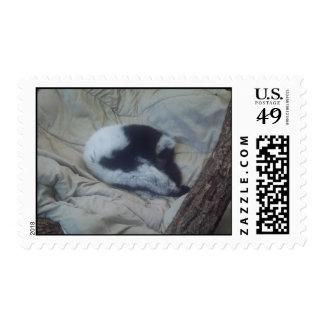 mono el dormir franqueo