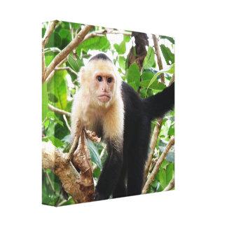 Mono en Costa Rica Impresión En Lienzo Estirada