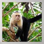 Mono en Costa Rica Póster