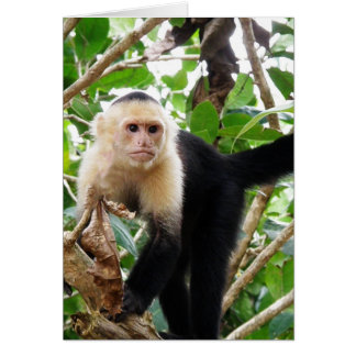 Mono en Costa Rica Tarjeta