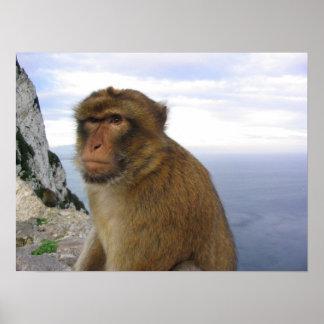 Mono en Gibralter Póster