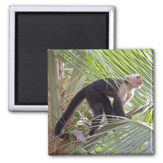 Mono en la foto de bambú de la selva iman para frigorífico