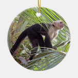 Mono en la foto de bambú de la selva ornatos