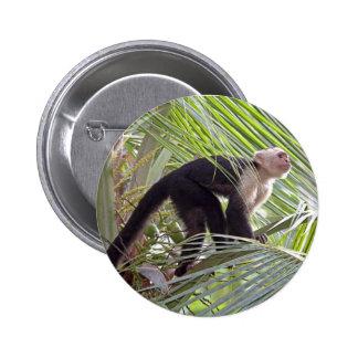 Mono en la foto de bambú de la selva pin