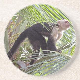Mono en la foto de bambú de la selva posavasos de arenisca