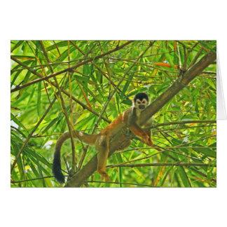 Mono en la selva de bambú