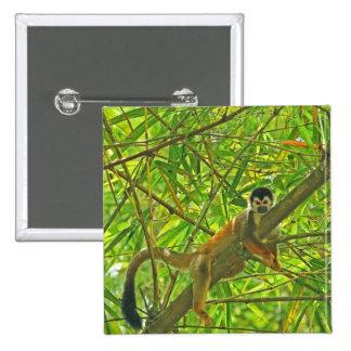 Mono en la selva de bambú pins