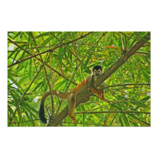 Mono en la selva de bambú póster