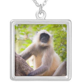 Mono en la selva del parque nacional de colgante cuadrado