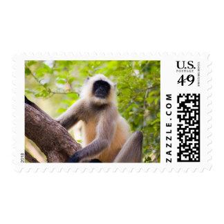 Mono en la selva del parque nacional de sellos
