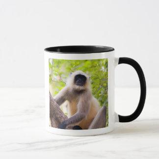 Mono en la selva del parque nacional de taza