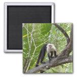 Mono en la selva iman