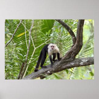 Mono en la selva posters