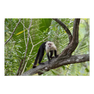 Mono en la selva impresiones