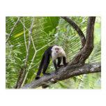 Mono en la selva postales