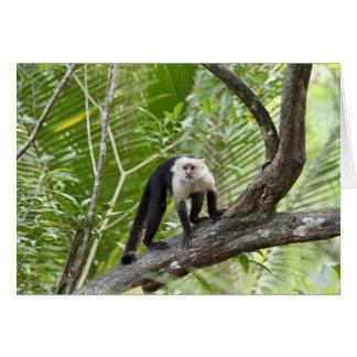 Mono en la selva tarjeta pequeña
