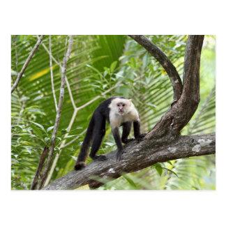 Mono en la selva postal
