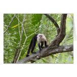 Mono en la selva tarjetas