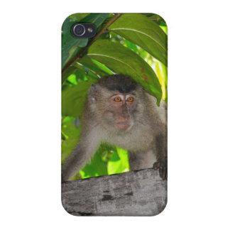 Mono en la selva tropical de Indonesia iPhone 4/4S Carcasas