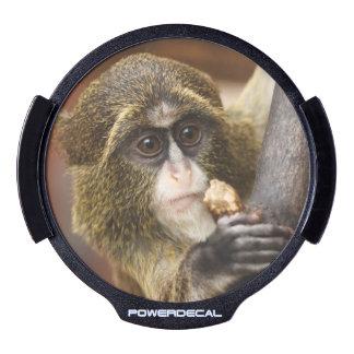 Mono en un árbol sticker LED para ventana