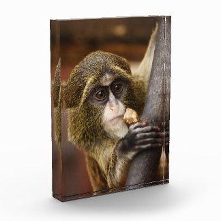 Mono en un árbol