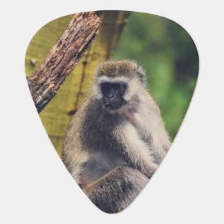 Mono en un árbol púa de guitarra