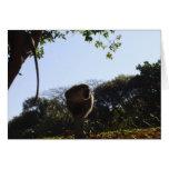 Mono en un poste de la cerca felicitación
