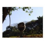 Mono en un poste de la cerca postales