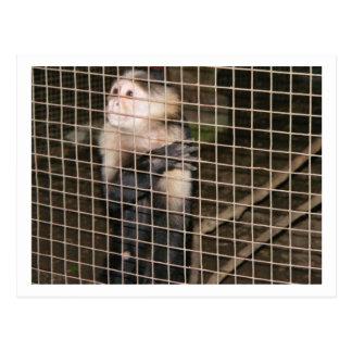 Mono enjaulado (postal)