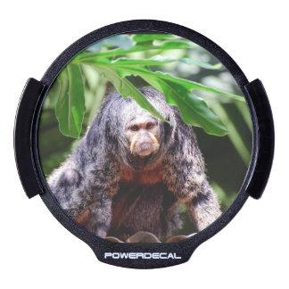 Mono femenino de Saki Decal LED Para Ventana