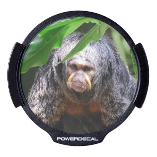 Mono femenino de Saki Pegatina LED Para Ventana