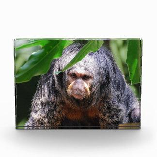 Mono femenino de Saki
