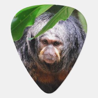 Mono femenino de Saki Plectro