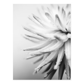 Mono Flower with water droplets Postcard