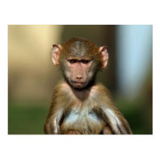 Mono fresco - postales lindas del babuino del bebé