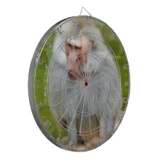 Mono gris, Macaque del mono, naturaleza, fauna