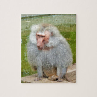 Mono gris, Macaque del mono, naturaleza, fauna Puzzle
