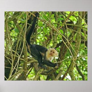 Mono hecho frente blanco en selva posters