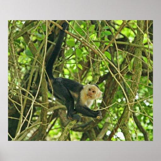 Mono hecho frente blanco en selva póster