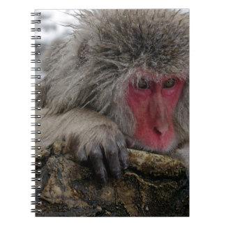 Mono japonés que se relaja en aguas termales libretas