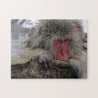 Mono japonés que se relaja en aguas termales rompecabeza con fotos